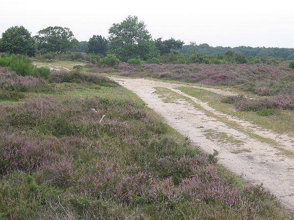 Blaricummer Heide, Blaricum